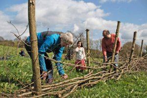 Community horticulture