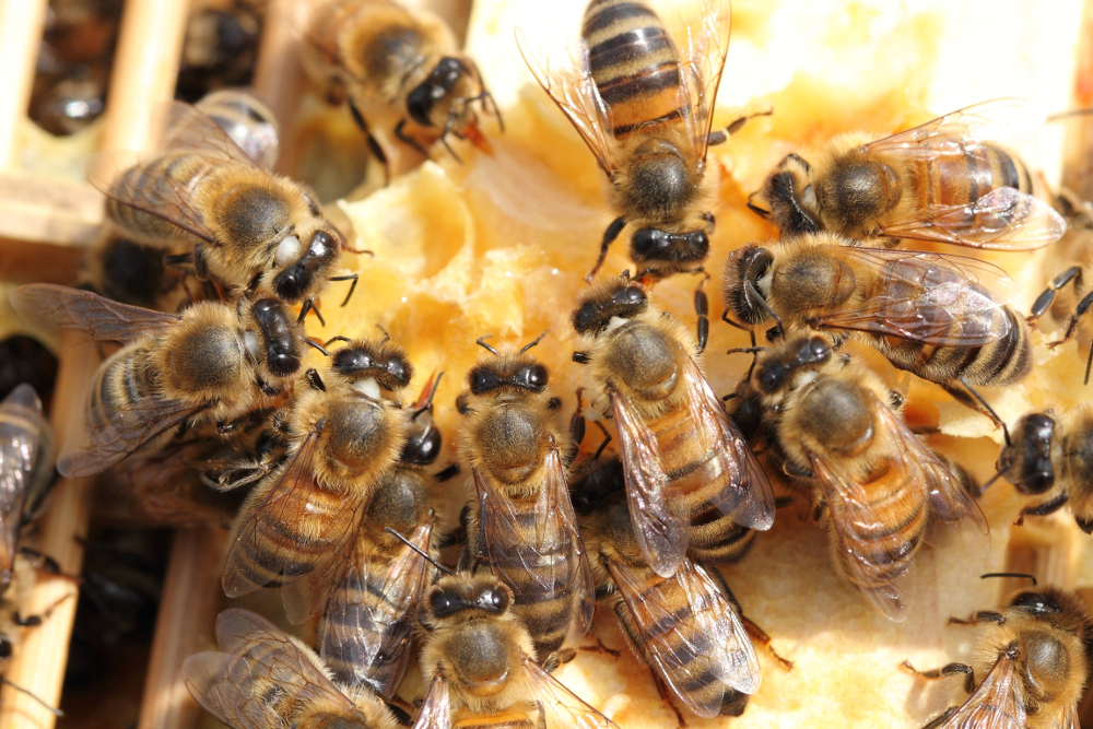 Buzzing About Whirlow Hall Farm Bees!
